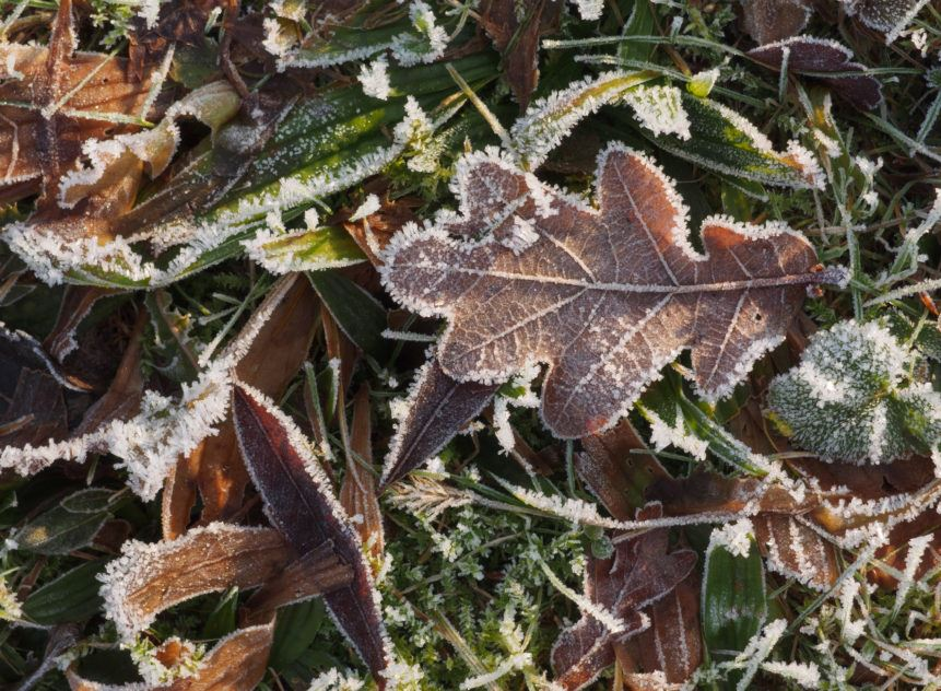 frozen-leaves-and-grass-861x632
