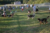Cranberry Rotary Dog Park